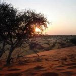 502-kalahari-anib-lodge